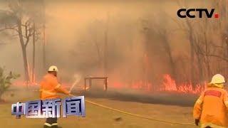 [中国新闻] 澳大利亚新南威尔士州发生丛林大火 | CCTV中文国际