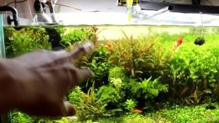 Коряги в аквариум своими руками и эксперимент с корягой с корой. Часть 1(как я готовлю коряги в аквариум сам ссылка на 2 часть: https://www.youtube.com/watch?v=5qfbvg75HgE Я все делаю за Спасибо! Если..., 2016-07-03T18:32:51.000Z)