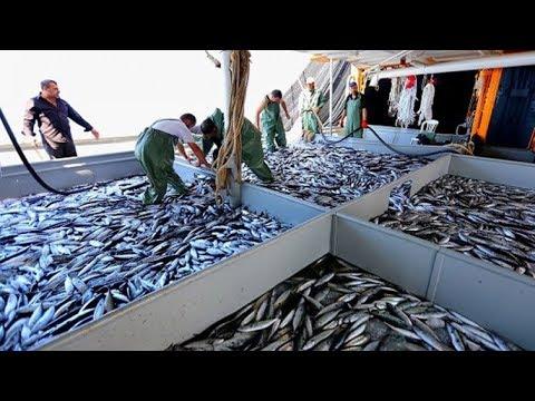 Amazing Big Catch Fishing Skill - Net Fishing In The Sea ▶ 2