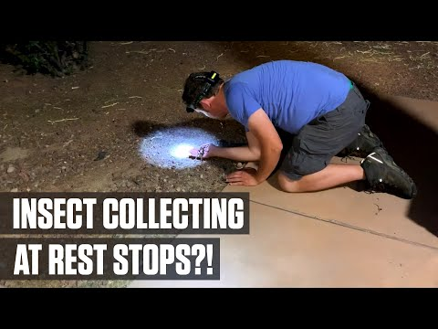 insect-collecting-rest-stops-part-6