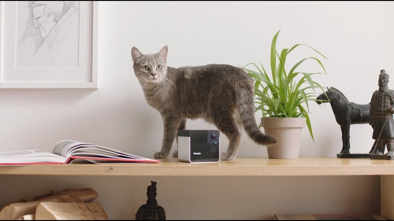 Meet Petcube Play 2, the Smartest Pet Camera with Laser Toy and Alexa Built-in