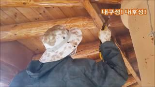 황토 목재도료 시공동영상