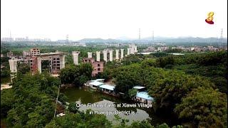 星期二特写 | 寻找新边际 第5集:第5集 - 中新广州知识城(下集)
