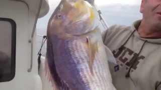 Η μεγαλύτερη Συναγρίδα στον κόσμο  γρ.  the largest fish in the world