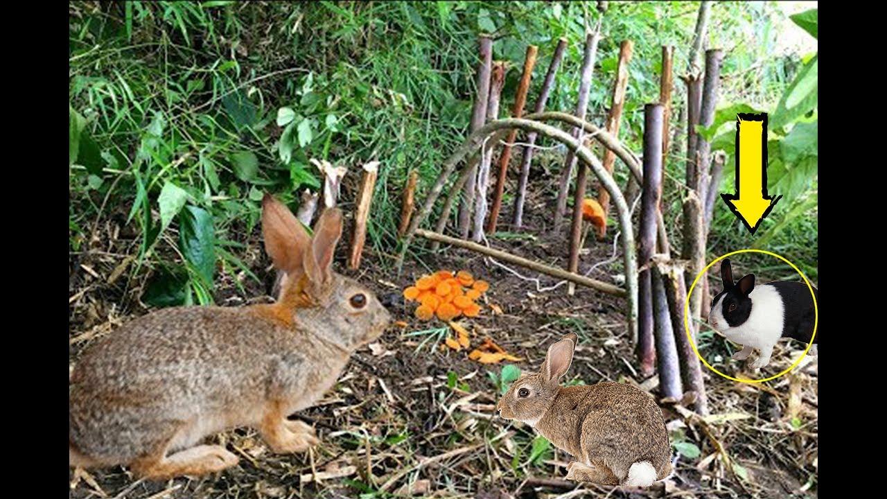 Как поймать кролика в огороде с помощью ловушек зимой