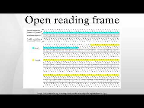 Open reading frame - YouTube