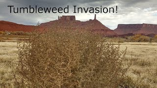 What is with Tumbleweeds Tumbling