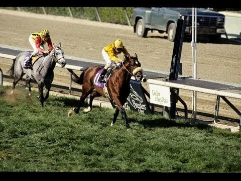 1993 Breeders Cup Mile Lure Post Race Youtube
