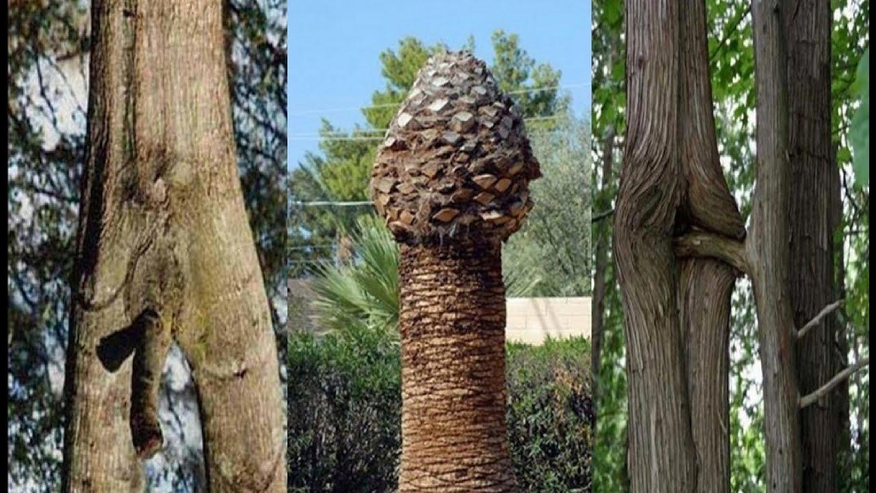 30 Bentuk Pohon Aneh Unik Lucu Yang Bikin Ngeres Pikiranmu