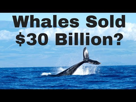 Early Bitcoin Whales Sold $30 BILLION to Speculators?