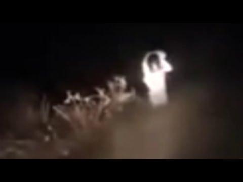 5 Unexplained Creatures Caught On Dashcam!