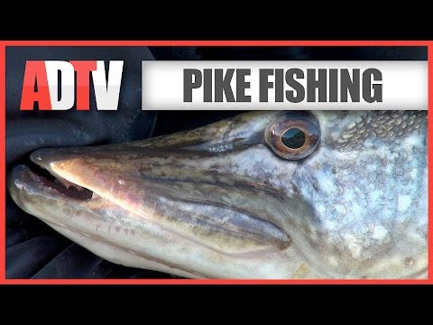 Float Fishing With Deadbaits For Pike - How To - Beginners Guide
