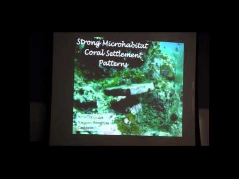 Robert Steneck - Benthic algae and the coral recruitment potential of Caribbean reefs