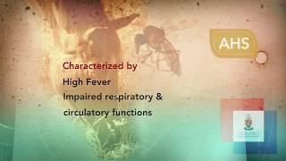 African Horse Sickness teaser