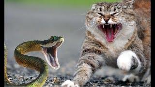 10 Невероятных Битв Животных Снятых На Камеру || смешной животный бой кошка & змея, крокодил, собака