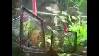 AquaGarant.ru Устройство и обслуживание аквариума(Видео об устройстве и обслуживании аквариума http://aquagarant.ru/obsluzhivanie-akvariuma., 2014-02-26T08:50:19.000Z)