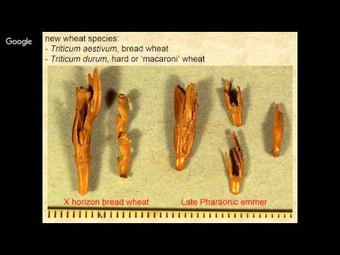 Qasr Ibrim & Agricultural Change 1000 BC - AD 1800 - Peter Rowley-Conwy (Durham University)