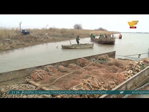 Как отразилась экологическая катастрофа на рыбной отрасли Атырауской области