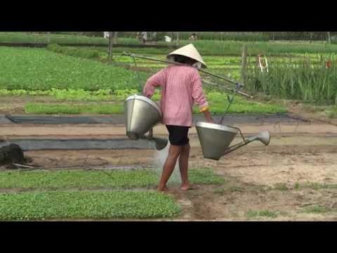 Farmers village and plantations, Hoi An, Vietnam 2
