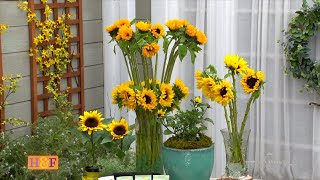 Grow GIANT Sunflowers from Seed Start Indoors Start Sunflowers Outdoors / Shirley Bovshow