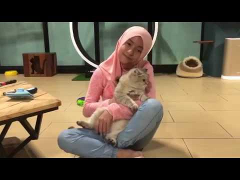 Mia Sara Nasuha dan Caramel - Klark Cat Studio