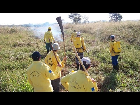 Curso Formação e Treinamento de Brigada de Incêndio Florestal - Combates da Brigada de Incêndio