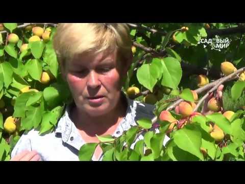 Выращивание плодовых деревьев. Садовый практикум