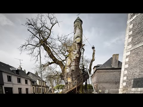 5 Trees You Won't Believe Actually Exist!
