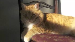 """Acoustic Blues"" Featuring Mr. Boots basking in the sun"