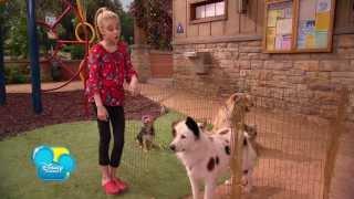 Hund mit Blog - Szene aus Episode # 17 - Stans Entscheidung - Picknick - Disney Channel