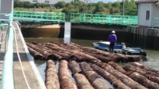 通船川の筏〜セクターゲートを超えて〜