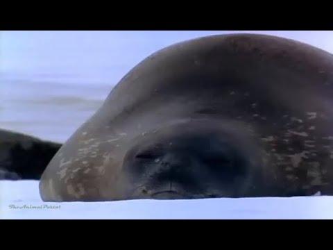 [New] - Antarctic Wildlife Adventures - National Geographic #558