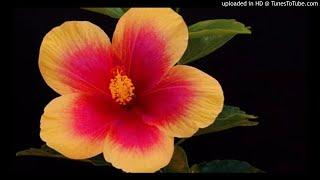 09 Ota-onani farzanddagi 10-haqqi (Fozil qori)