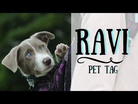 PET TAG w. RAVI the Border collie | Ako so psom