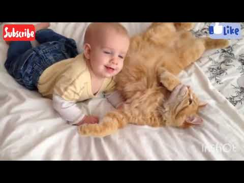 ?FUNNY CATS??       #cute#babycat#funnycats#animals#dog