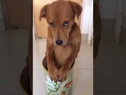 Dog Series: When my dog is guilty after doing something wrong