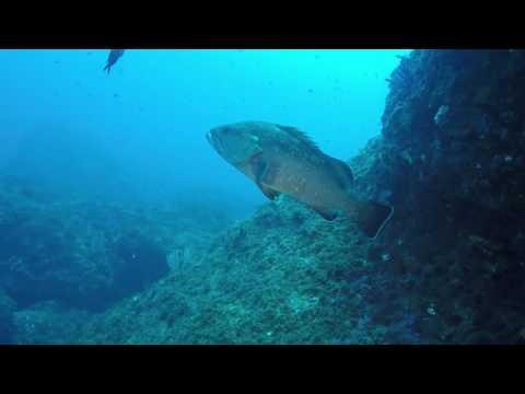 Bootduik LaVaca (Medes eilanden, Costa Brava)