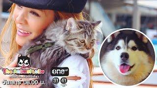รายการ The Animal Lulla ช่อง one HD ES.53