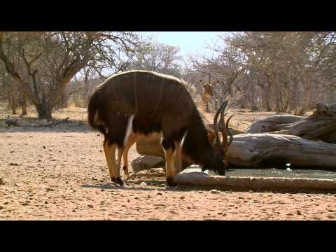 Will and Jimmy Primos Hunting African Game - Part 4
