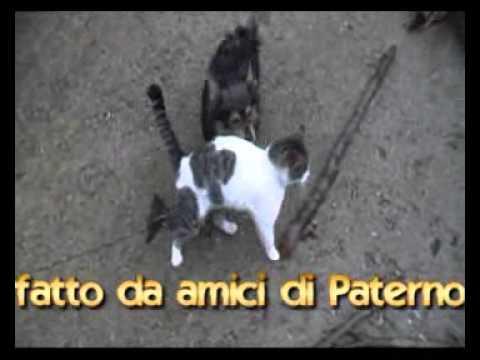 Come cani e gatti video sconsigliato ai bambini youtube for Youtube cani e gatti