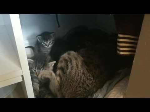 Cute Kittens!