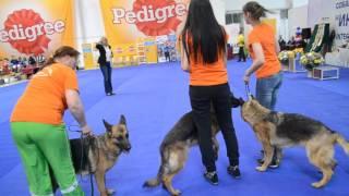 Конкурс питомников на Международной выставке в Омске 15.05.2016