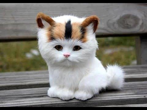 Funny Videos -  Cute Cat  - Cute Dog  - Most Funny Pet Videos  -  Reverse video