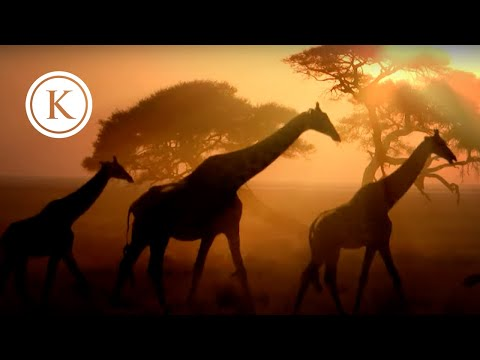 Kensington African Safaris