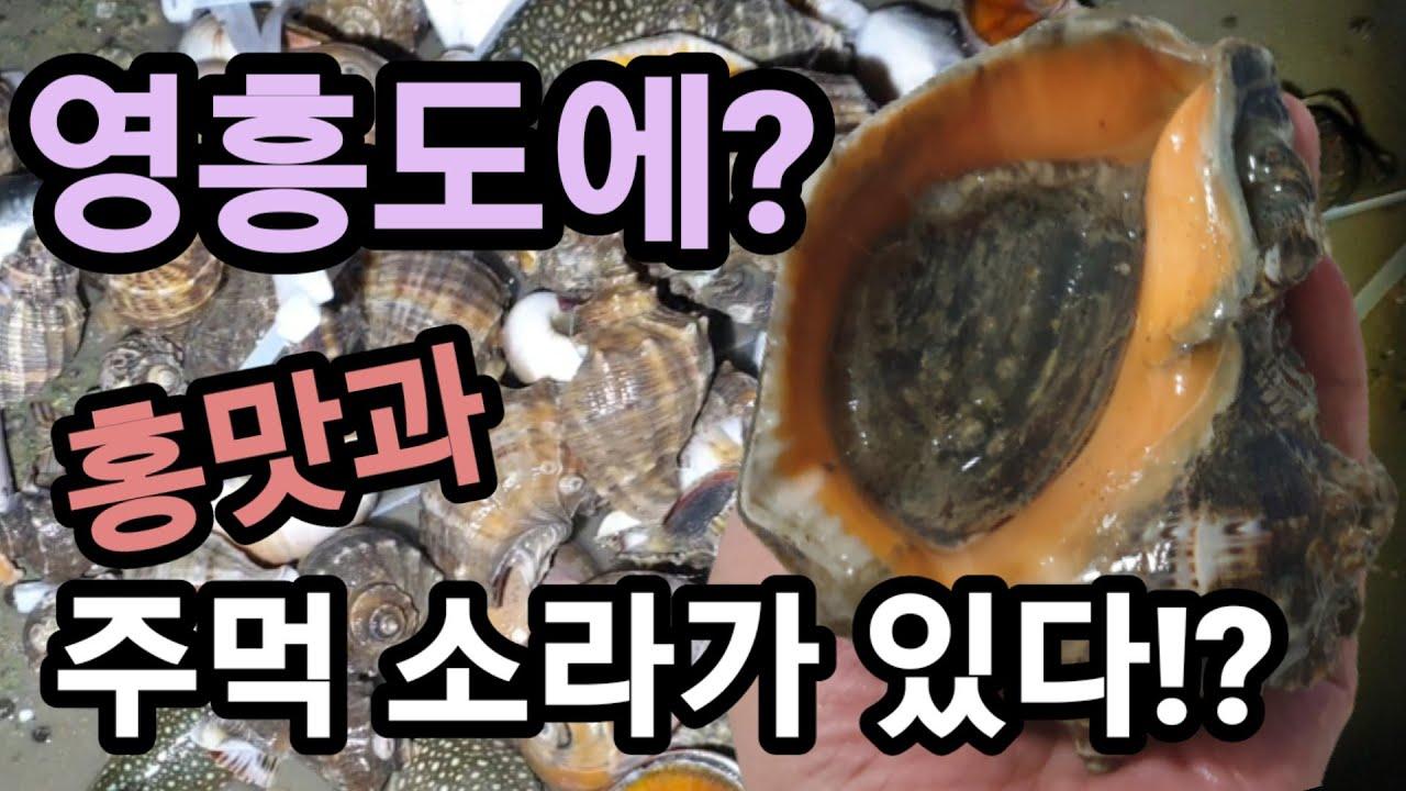 홍맛과 강쥐(주먹소라)가 나오는 영흥도! 보물섬 발견!