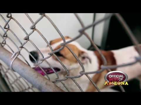 Tombstone Animal Shelter - Best Small Animal Rescue - Arizona 2017