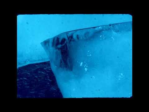 Black Taffy - Lantern Flies In Mist Mp3
