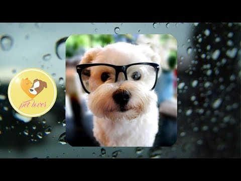 Cute dogs and cats funny video ♥ #32 | Pet lover