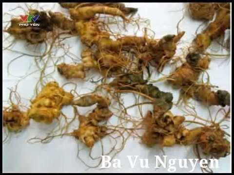 Bạn nhà nông - Triển vọng cây sâm Ngọc Linh ở Lâm Đồng