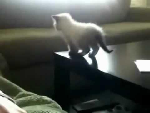 7 gatos que desafiaram a gravidade